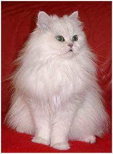 friert eine katze